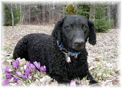 Quail Hunting Dogs 4